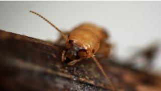Loi termite : que prévoit-elle ?